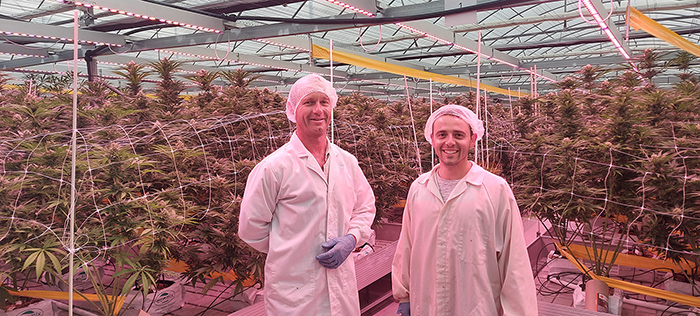 medicinal cannabis farm owrkers